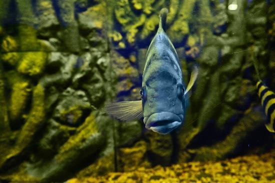 ocean-aquarium